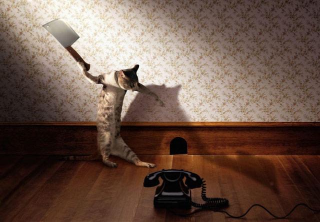 скачать игру кота на телефон - фото 11